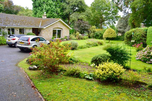 Thumbnail Detached bungalow for sale in Brewery Lane, Holcombe