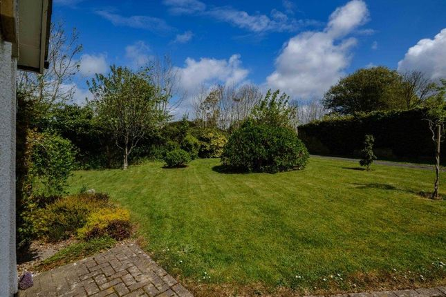 Front Garden of St Tudy, St Tudy PL30