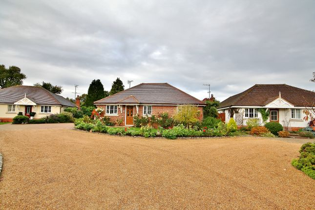 Thumbnail Detached bungalow for sale in Oaks Way, Ripley, Woking