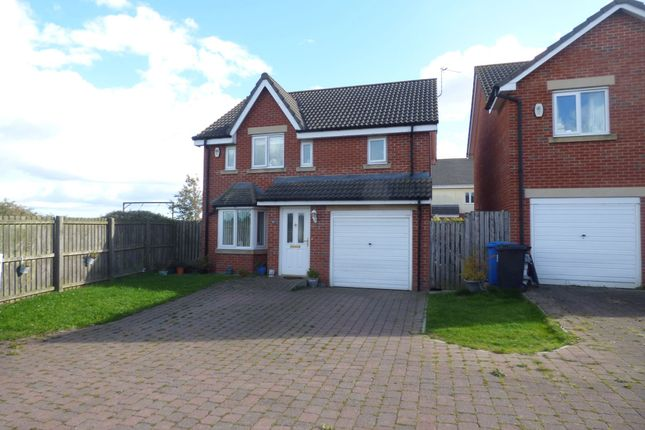 Thumbnail Detached house to rent in Chestnut Way, Widdrington, Morpeth
