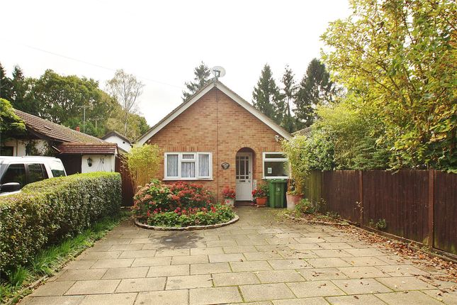 Thumbnail Detached bungalow for sale in Bisley, Woking, Surrey