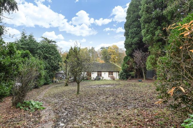Thumbnail Bungalow for sale in Westwood Road, Windlesham