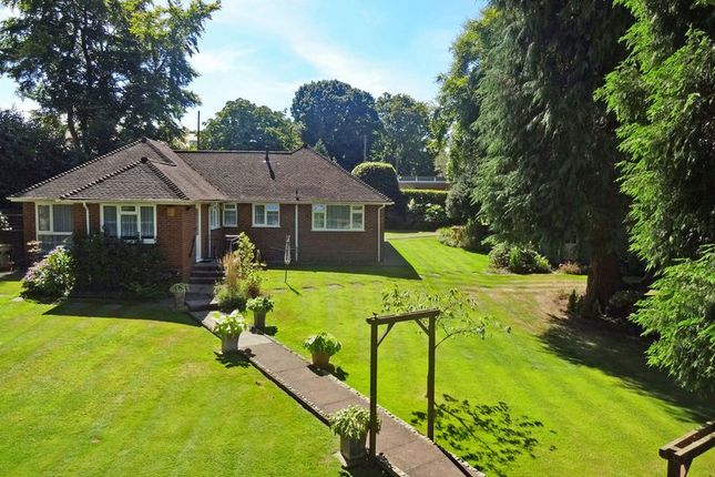 Thumbnail Bungalow to rent in Headley Road, Grayshott, Hindhead