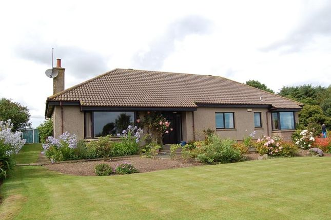 Thumbnail Bungalow to rent in Kingston, Pitmillan, Newburgh, Aberdeenshire