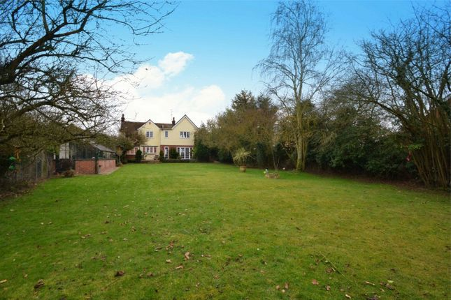 Thumbnail Detached house for sale in Fairstead Road, Terling, Chelmsford, Essex