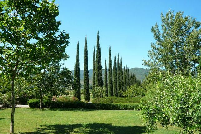 Cypress And Garden