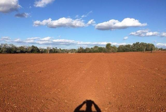 Land for sale in 07630 Campos, Illes Balears, Spain