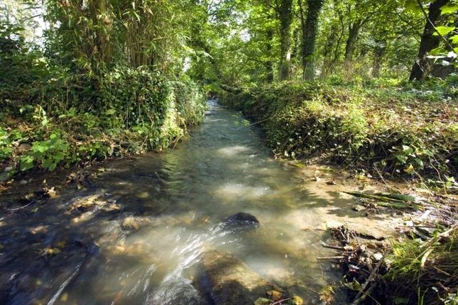 Stream of Vicarage Hill, Tintagel, Cornwall PL34
