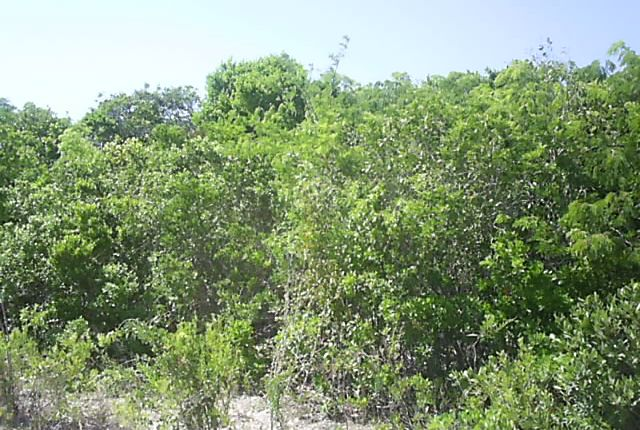 Land for sale in Long Island, The Bahamas