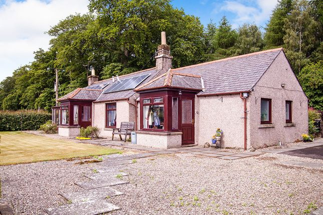 Thumbnail Bungalow for sale in Brechin