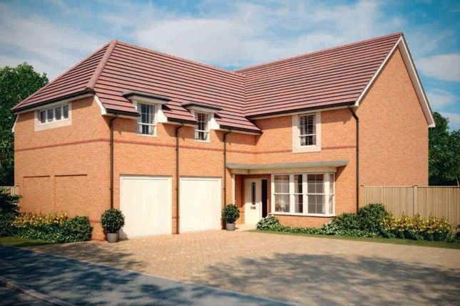 "Thumbnail Detached house for sale in ""Rothbury"" at Blackthorn Crescent, Brixworth, Northampton"